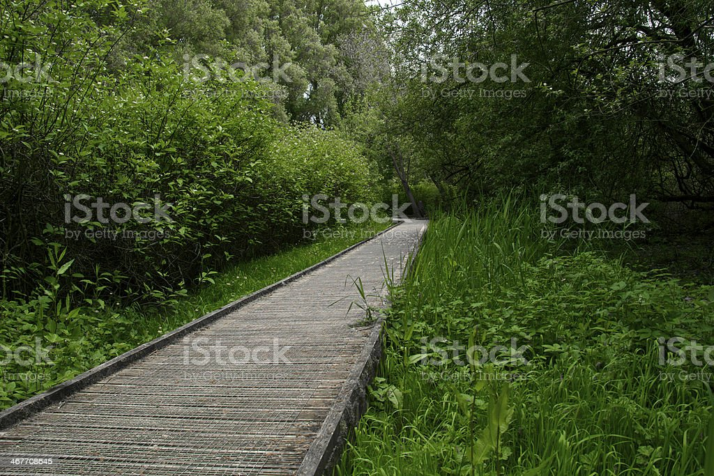 Long walk through forest stock photo
