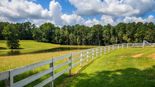 A Long White Fence A large tree shades the front area of a white fence. There is a pasture, pond and trees in the background. Clouds and blue sky are in the background. ranch stock pictures, royalty-free photos & images