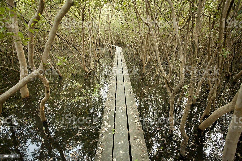 long wood bridge royalty-free stock photo