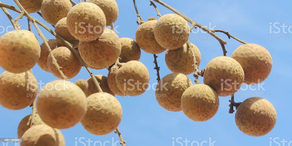 longan fruit and sky stock photo