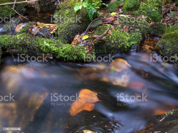Photo of Long-exposure images of the stream of a brook with rocks and logs covered in moss