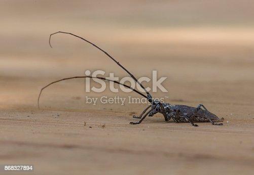 istock Longhorn Beetle 868327894
