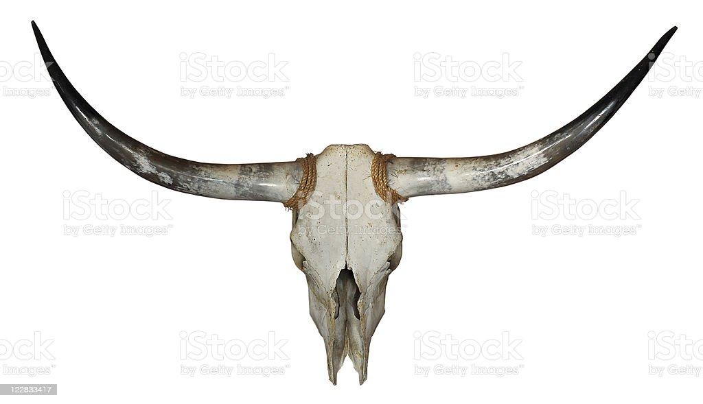 Longhorn Skull royalty-free stock photo