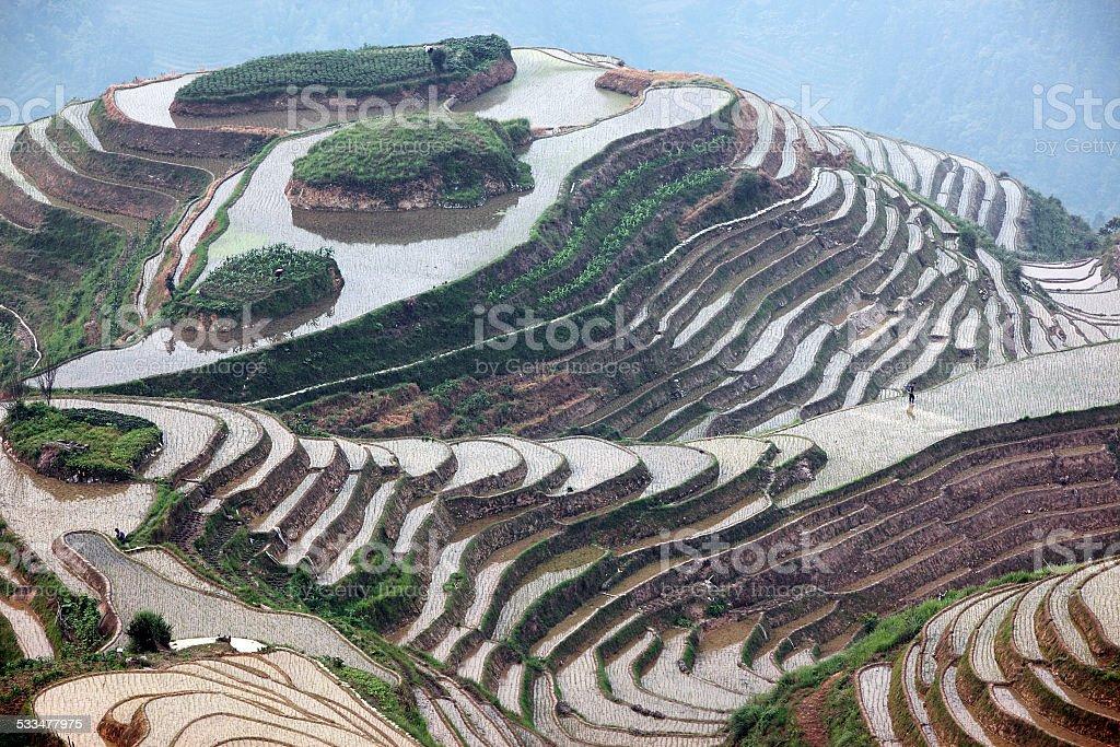 Longji rice terraces, China stock photo
