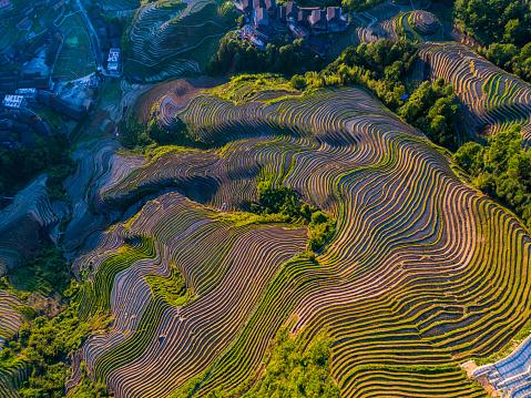 Longji Terraced Fields In Longshengguilinchina Stock Photo - Download Image Now