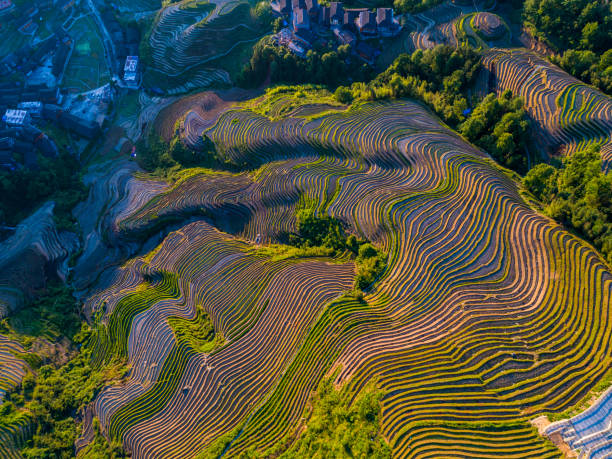 Longji Terraced Fields in Longsheng,Guilin,China