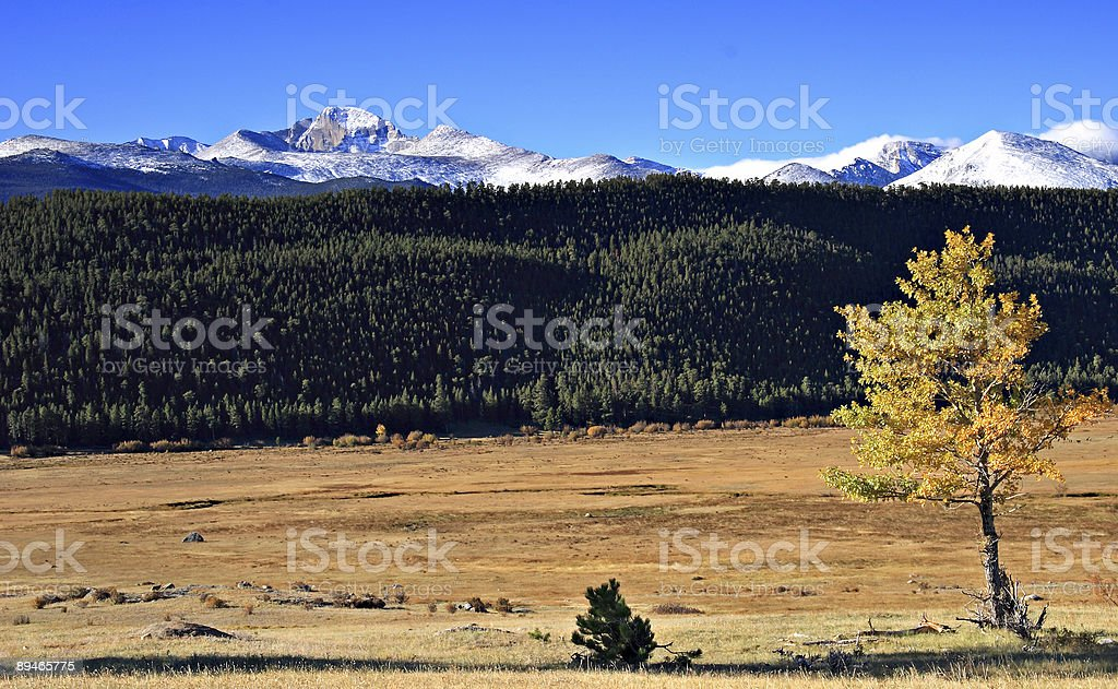Longs Peak and Aspen Tree - Rocky Mountain National Park stock photo