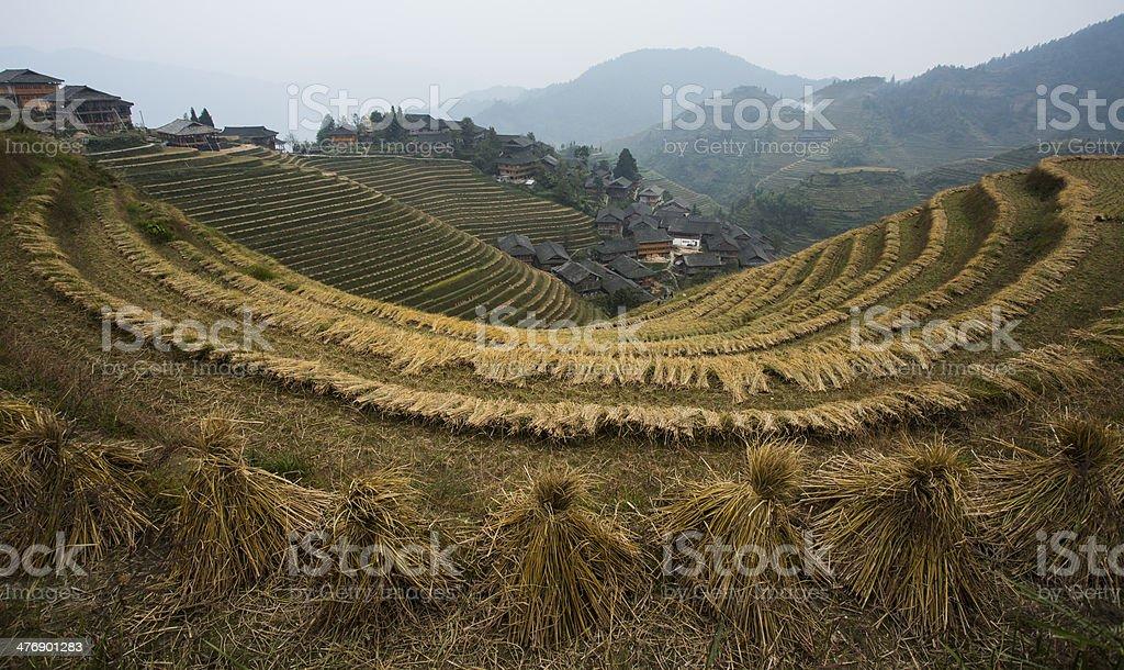 Longsheng rice terraces after harvest stock photo