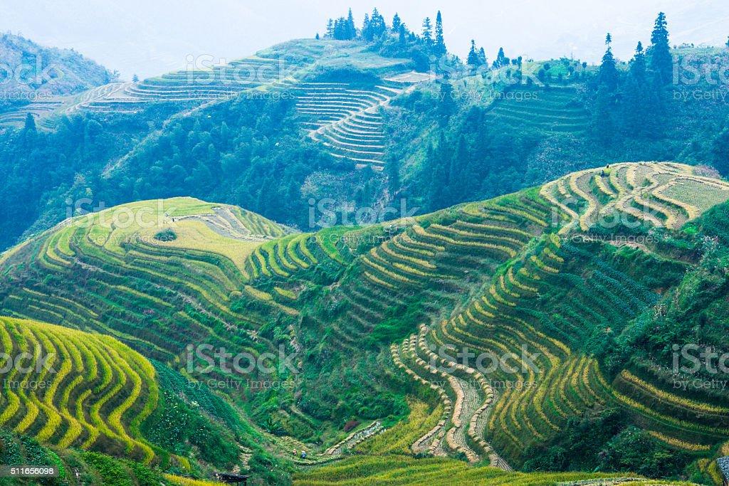 Longsheng Rice Terraces in China stock photo