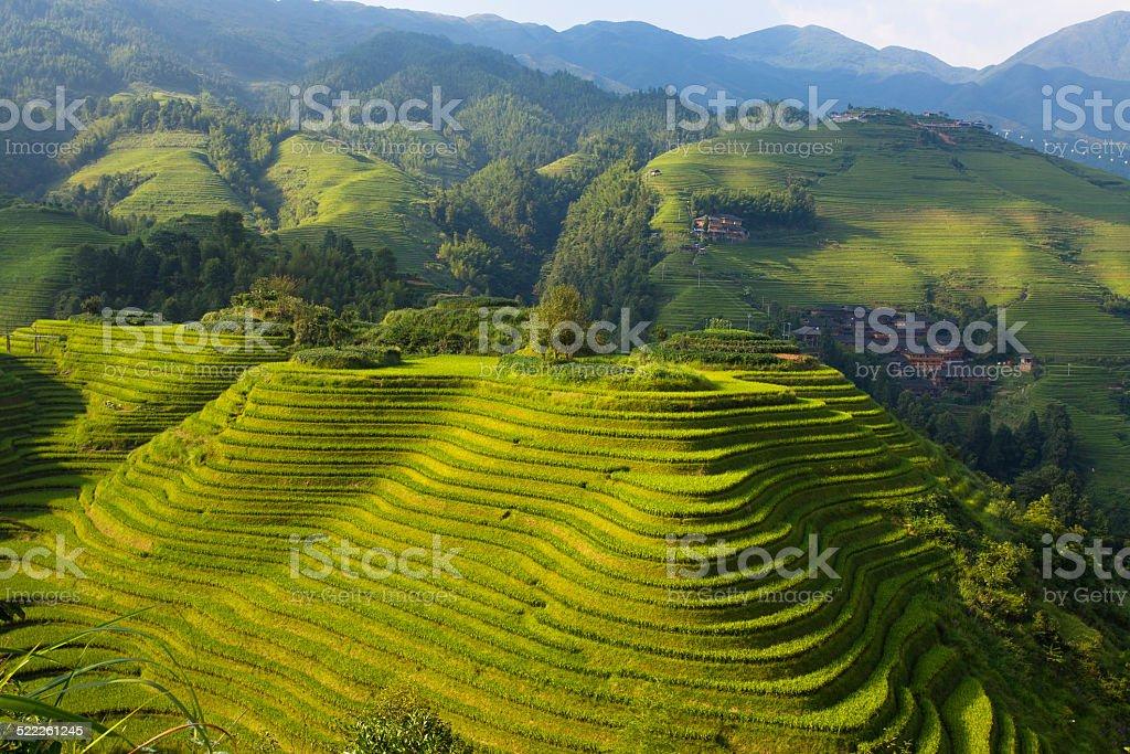 Longsheng Terraced Landscape stock photo