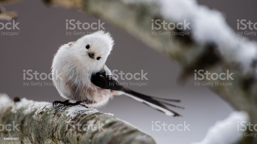 Long-tailed Look stock photo