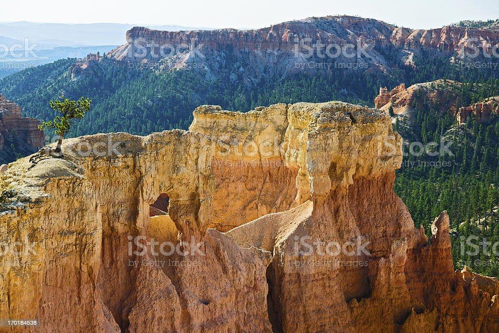 Lonly Tree in Bryce Canyon Utah USA stock photo
