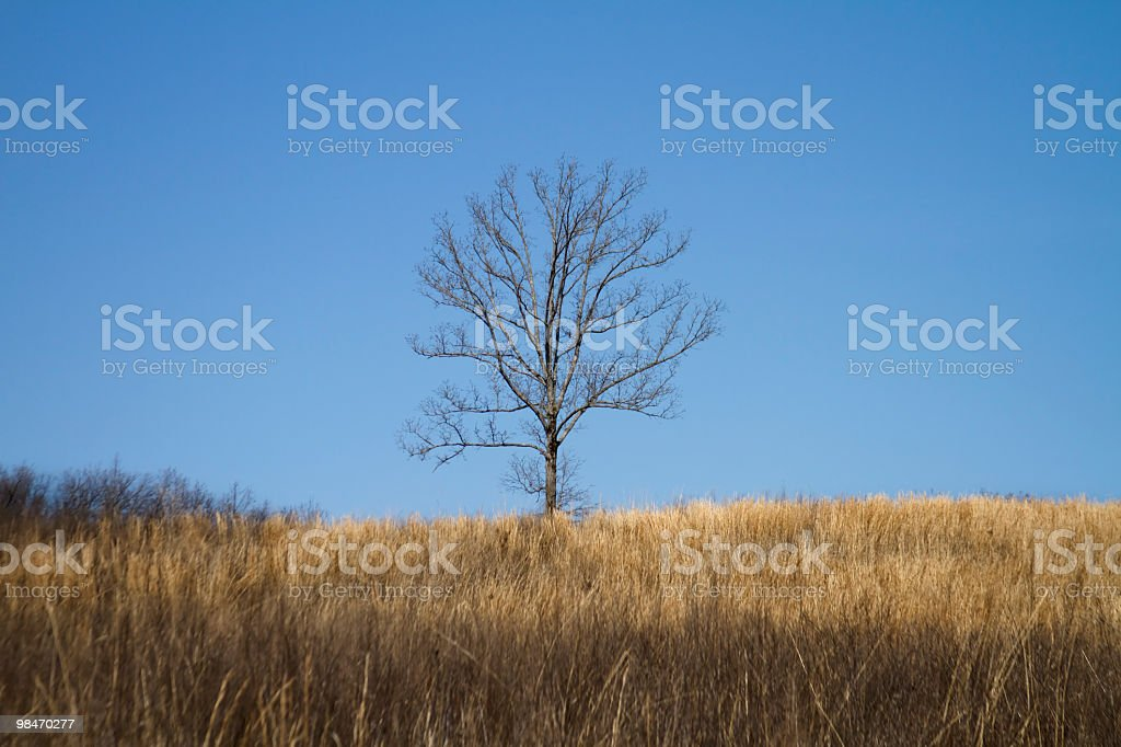 Lonly albero in erba foto stock royalty-free