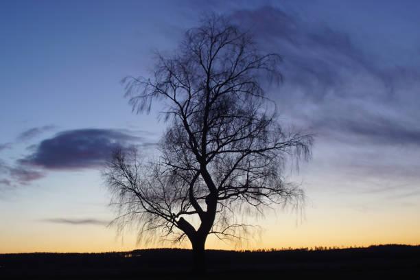 Lonseome träd bildbanksfoto