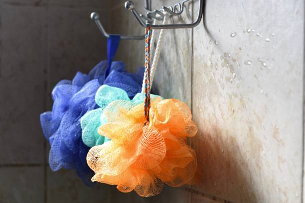 Luffa arc-en-ciel - Photo