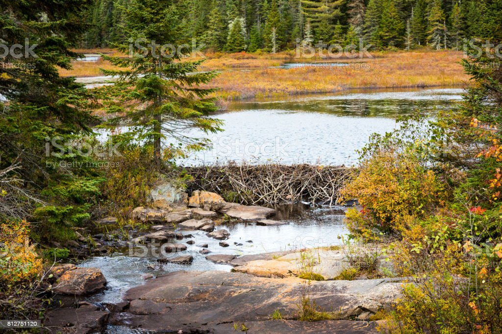 A look at a beaver dam in La Mauricie National Park, situated near Shawinigan in Québec. stock photo