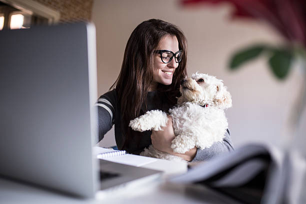 look at me little one. woman and her dog - happy dogs stock photos and pictures