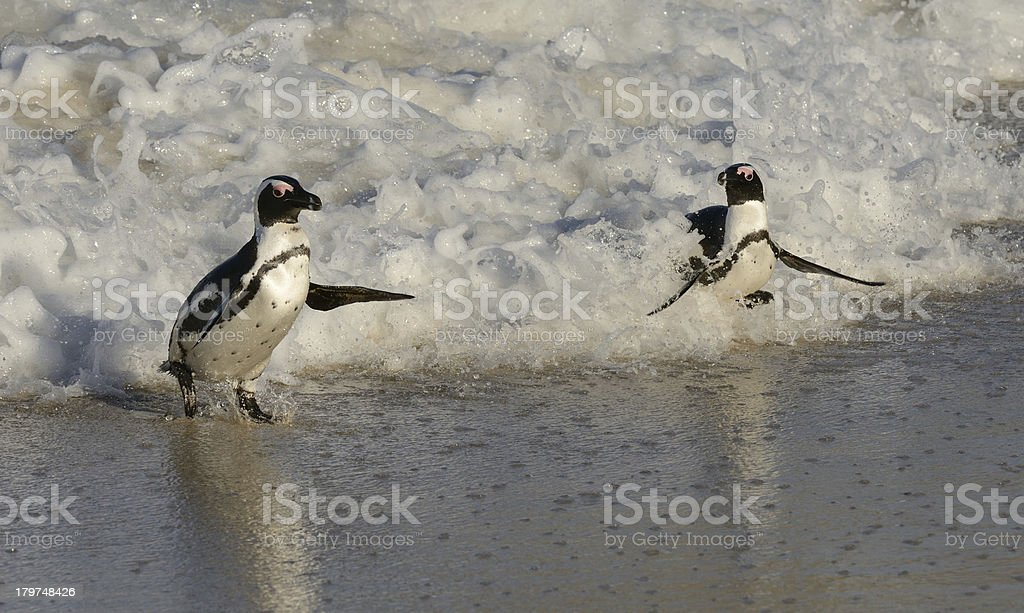 Look At My Surfing Brother stock photo
