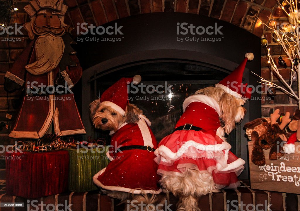 look both ways - sister dogs stock photo