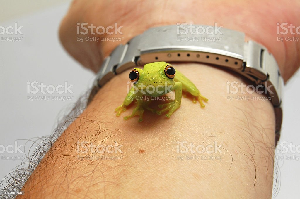 look expressive frog royalty-free stock photo