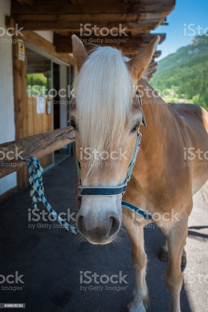 Look of a horse stock photo