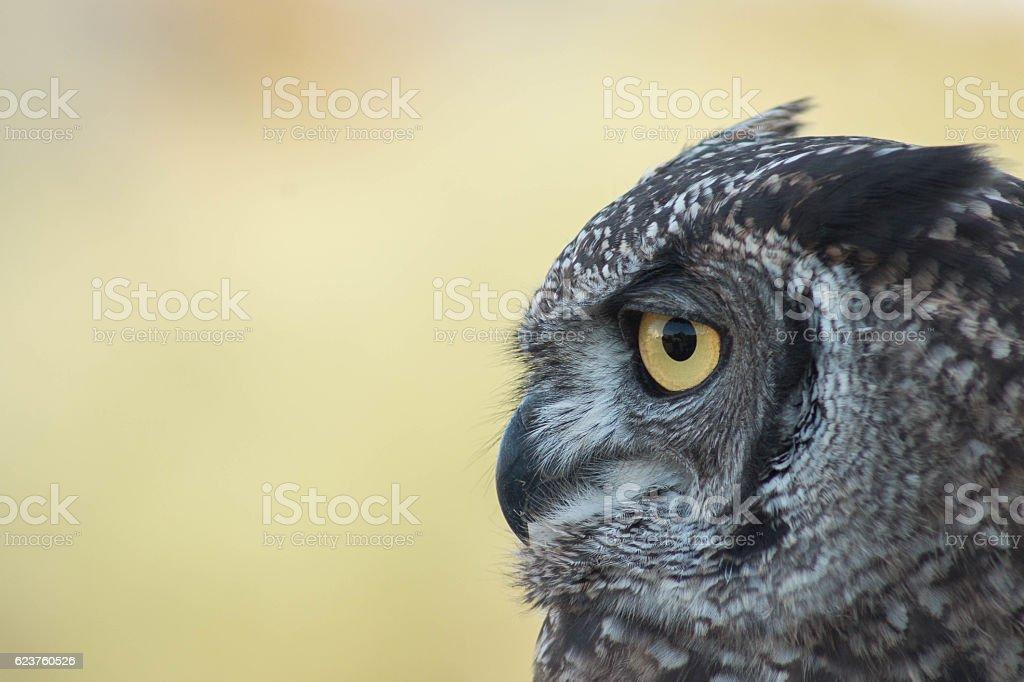 Look of owl stock photo