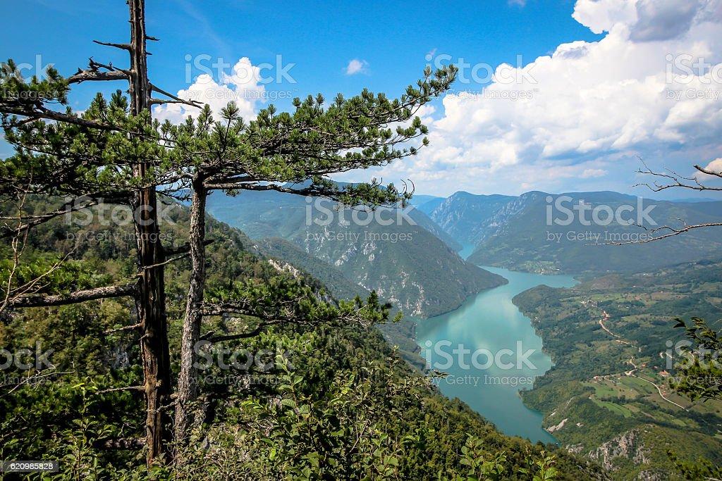 Look on Tara canyon, Tara mountain, Serbia foto royalty-free