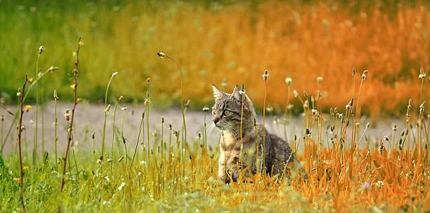 Look out kitty picture id502564969?b=1&k=6&m=502564969&s=612x612&w=0&h=daokpe2mb6 5y9kwbdpgkvt1byeocfun7wqrv8g7zii=