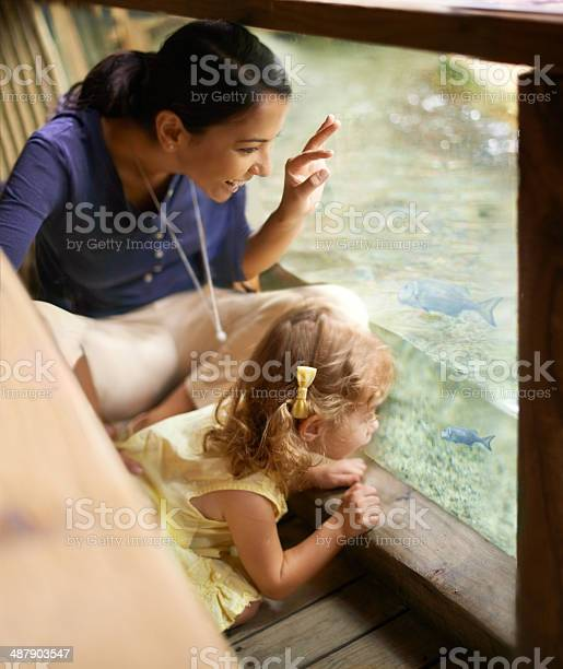 Look theres a mommy fish and her little one picture id487903547?b=1&k=6&m=487903547&s=612x612&h=z201vg pc qkkdomlqbu7jjdzrcwsnyrbxywuwgosjc=