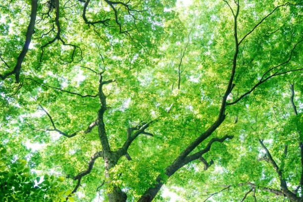 look up at the trees in the forest - 介護 zdjęcia i obrazy z banku zdjęć