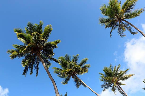 Blick auf palm drei – Foto