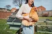Woman holding her pet buff orpington hen while standing in her garden.