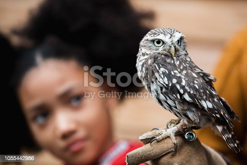 Group of school children and their teachers on a school field trip to a falconry. There is a falconer who is talking and teaching the children about the different birds of prey.