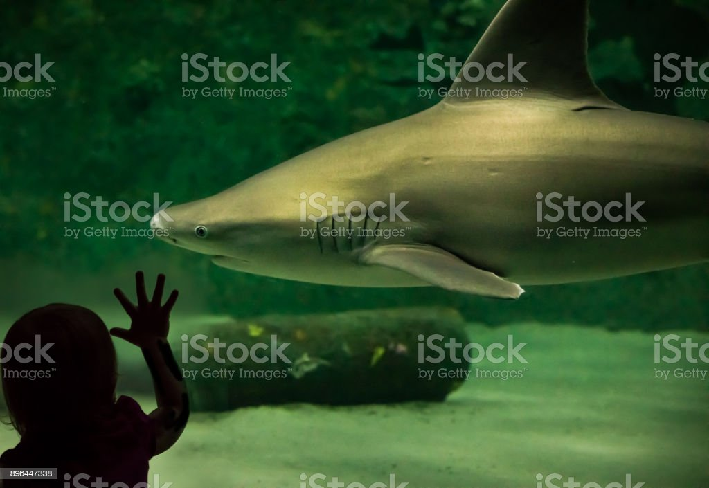 Looking at a Shark stock photo