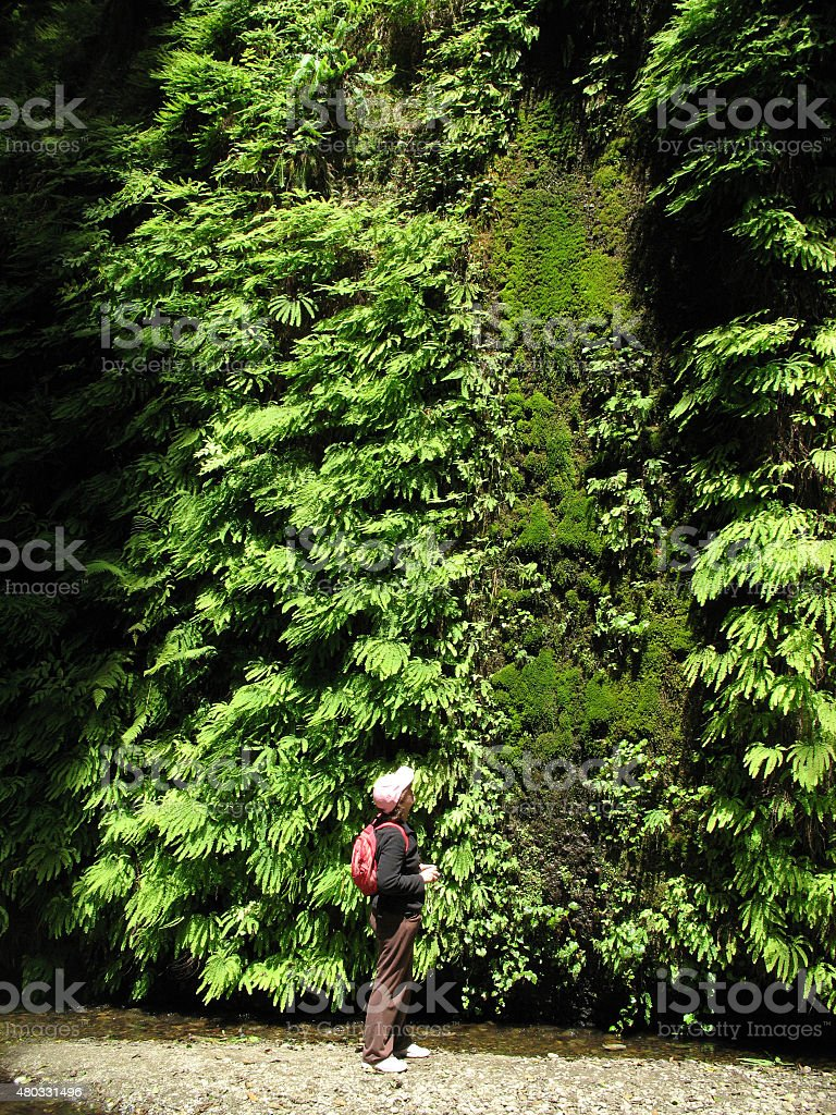 Looking at a wall of ferns stock photo
