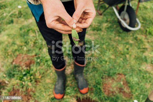 Unrecognisable man holding a small green leaf with a slug on it.