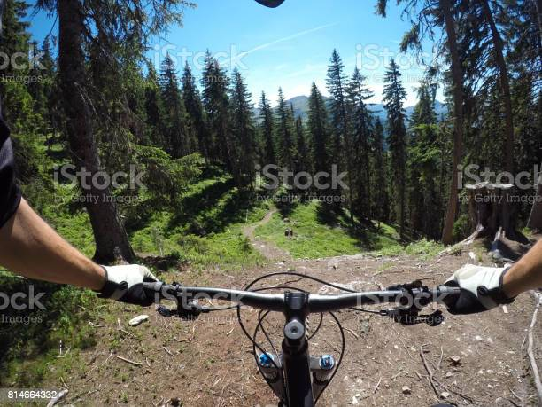 Photo of Looking at spruce tree forest from a mountain bike