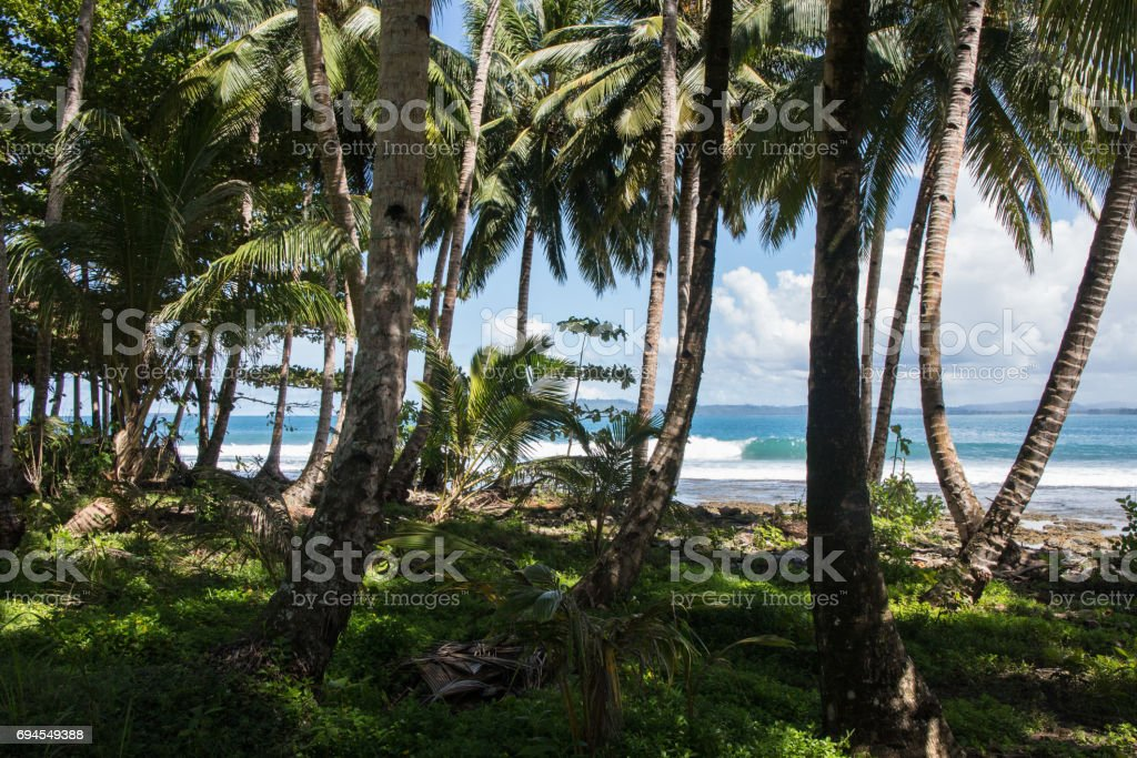 Looking at the ocean and waves from the palm tree forest stock photo