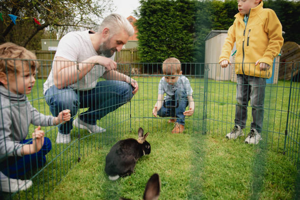 looking at the rabbits - playpen stock pictures, royalty-free photos & images