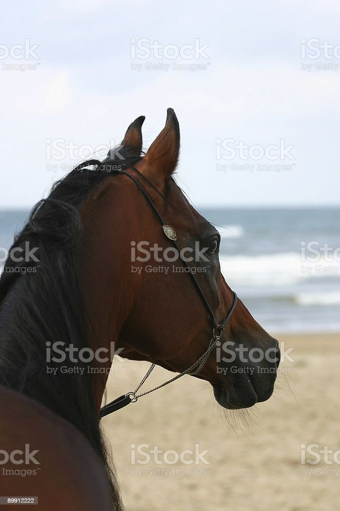 Looking at the waves royalty-free stock photo