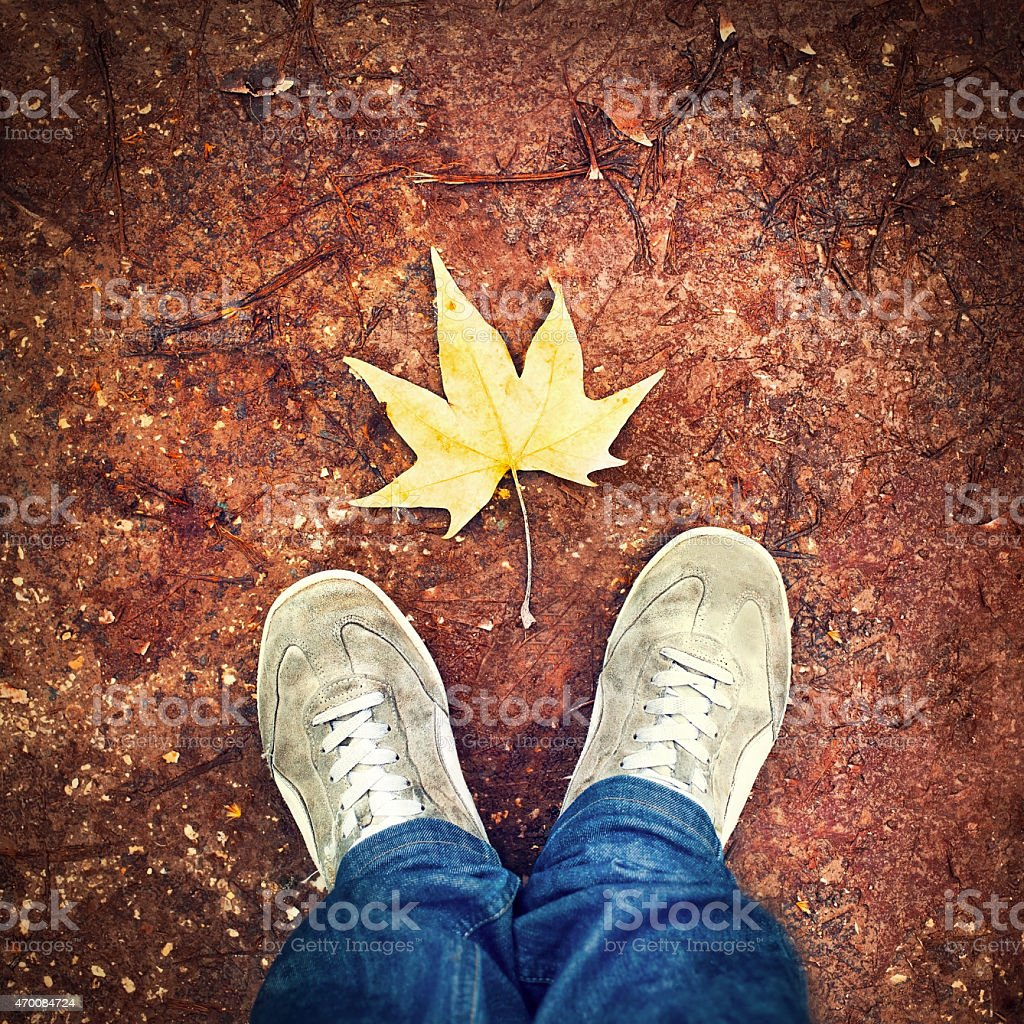 looking at yellow leaf from above in autumn stock photo