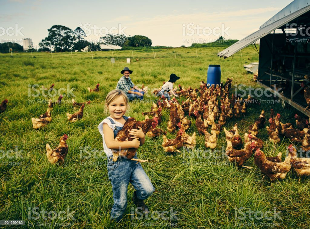 Looking cheerful on the chicken farm stock photo