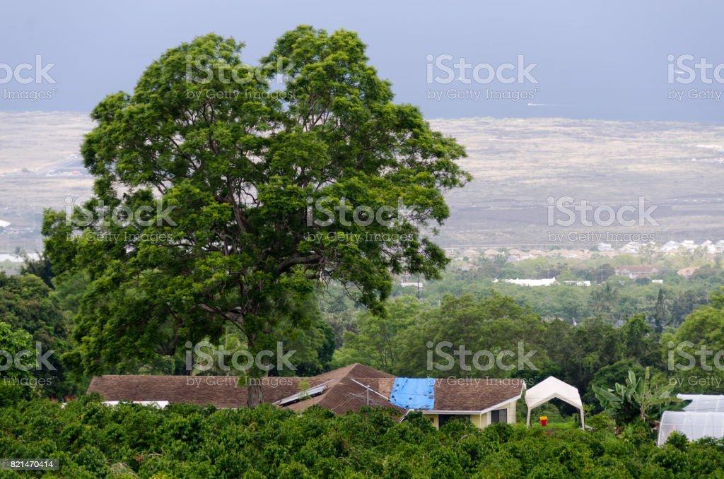 Looking down at Kona coffee plantation from Mamalahoa highway, Kailua Kona, Big Island, hawaii stock photo
