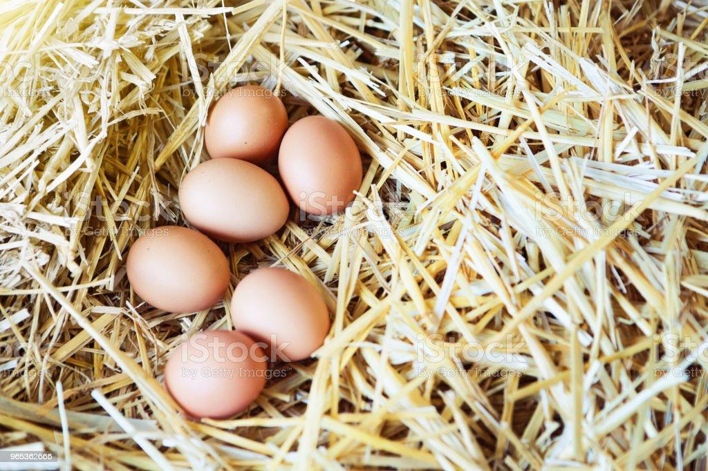 Looking down at six hen's eggs in straw nest zbiór zdjęć royalty-free