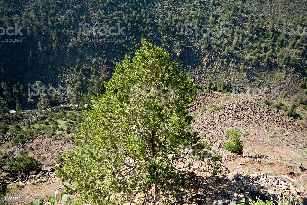 Looking Down Into Rio Grande River Gorge New Mexico, USA royalty-free stock photo