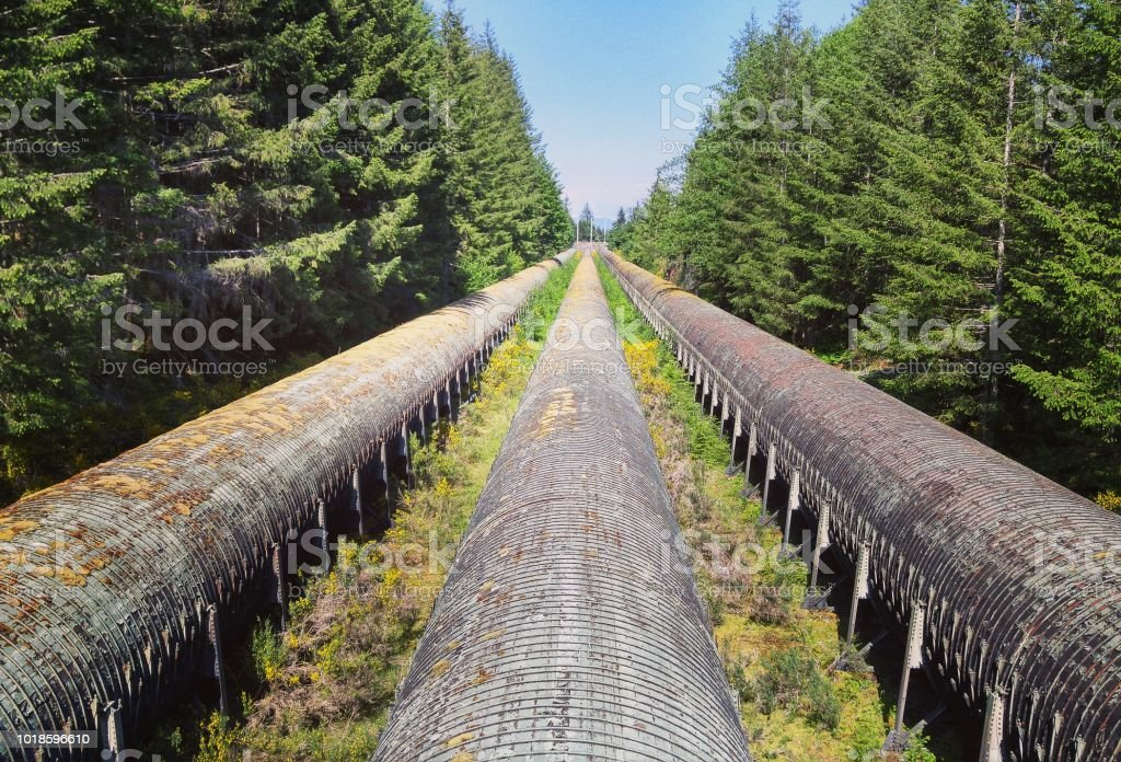Looking down old enormous water pipes in the forest stock photo