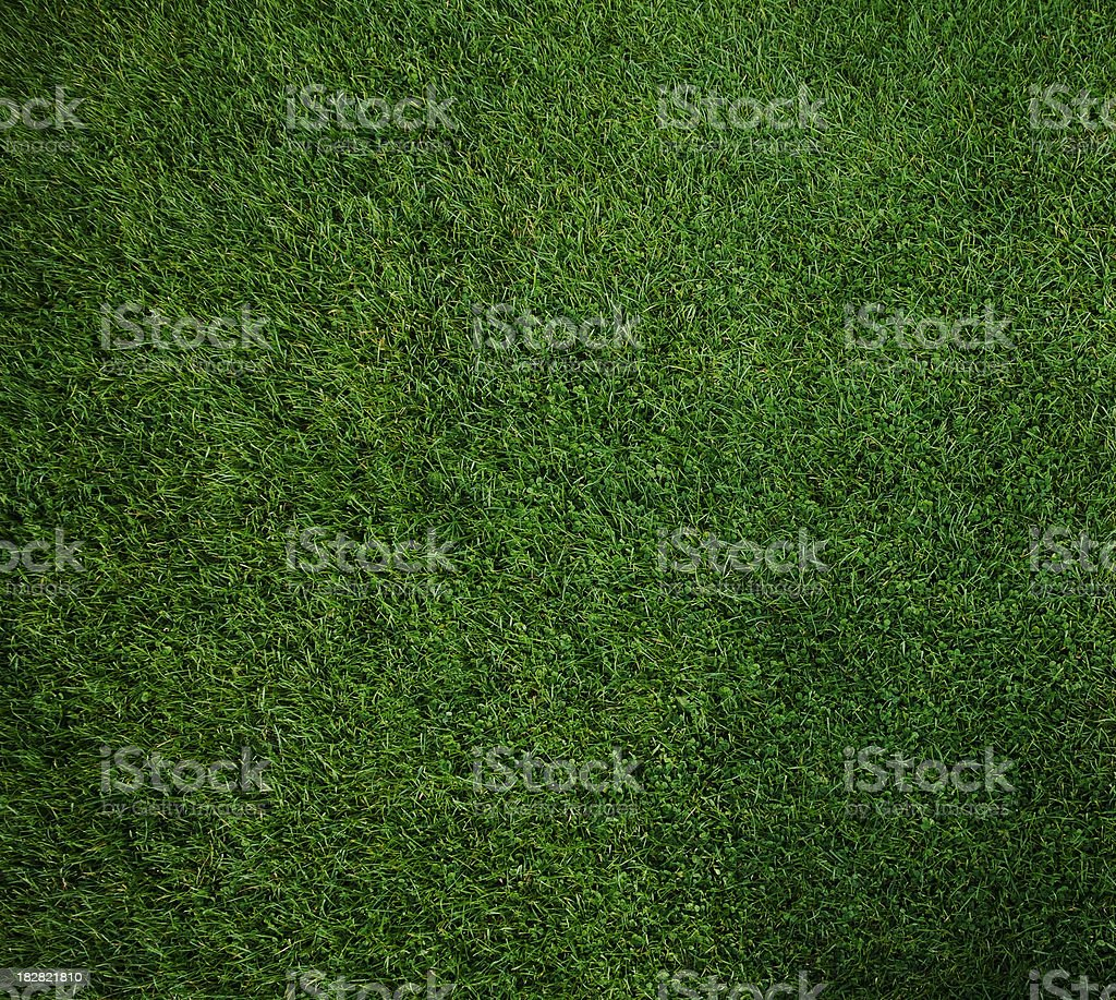 Looking down on a pure green square of moss stock photo