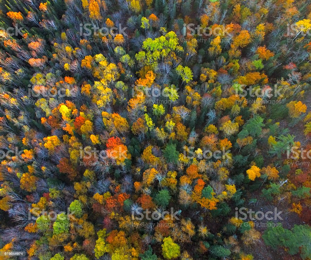 Looking down on Autumn colors at the last light – Foto