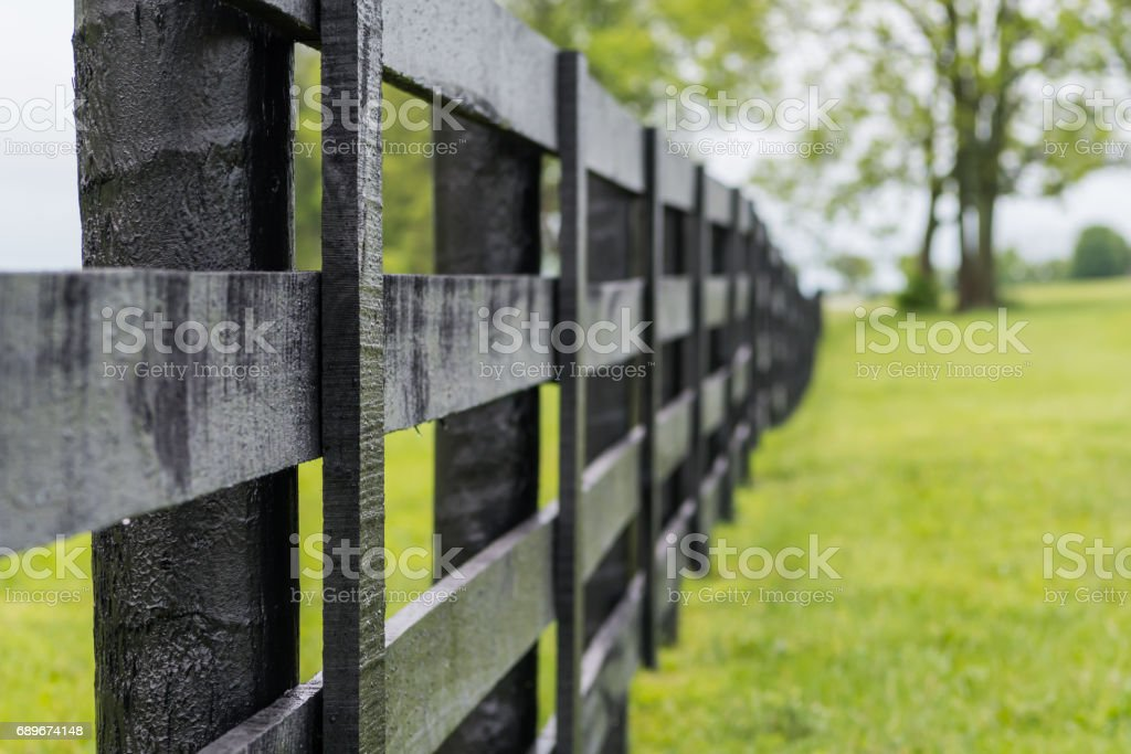 Looking Down the Line of Black Horse Fence stock photo