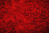 Looking down upon a bed of rich, red roses
